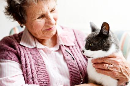 Ear Mites | Pets & Parasites: The Pet Owner's Parasite Resource